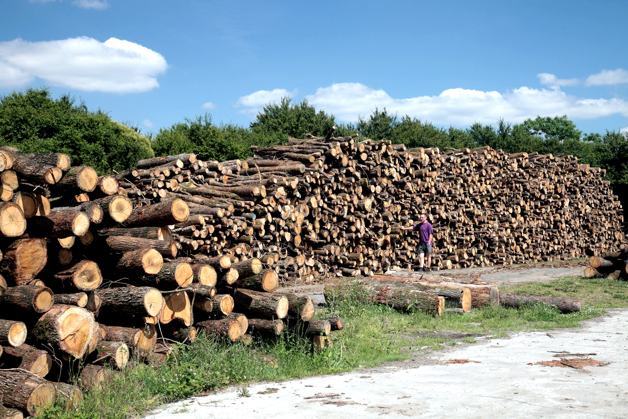 Production transformation et vente d'essences de bois en Vendée