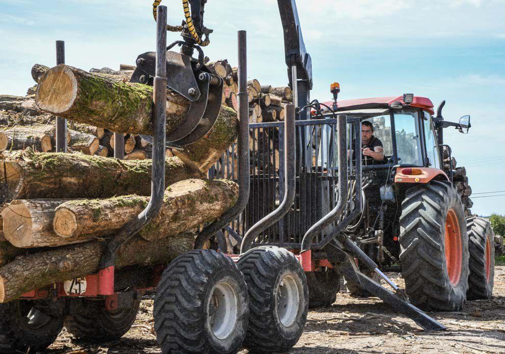 Production sciure de bois